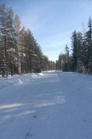 Metsään haluan mennä nyt..