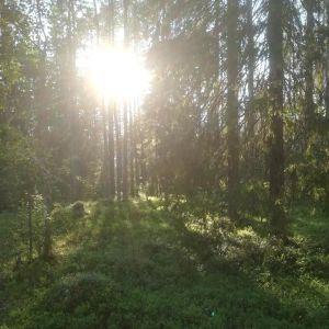 Peikkometsän aurinko laskee