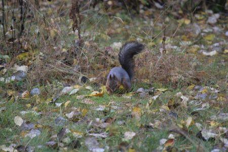 Pähkinän piilottelua