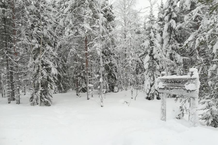 Reitti Talaskankaalle lumen vallassa