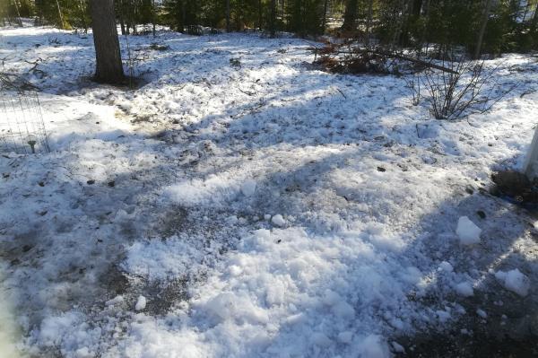 Lumikasan levittelyä