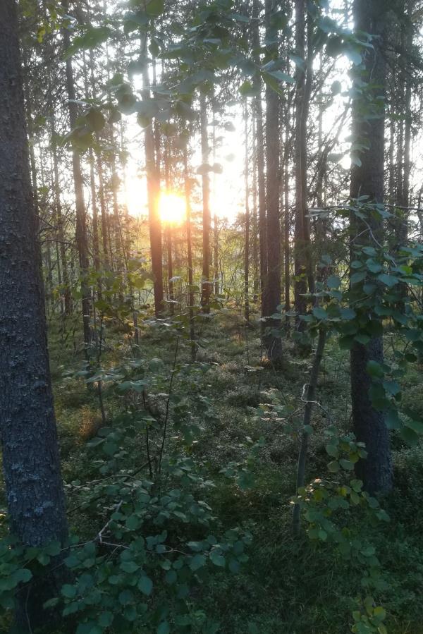 Peikkometsän auringonlasku