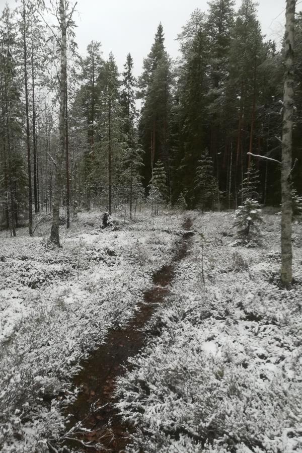 Sunnuntaina lunta maassa