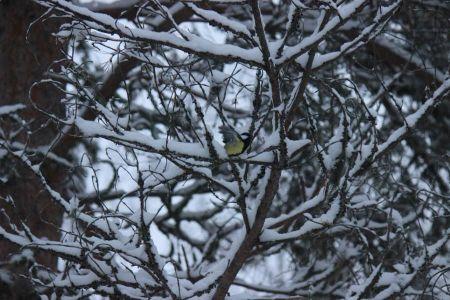 Pihapuussa vauhtia ja vaaratilanteita