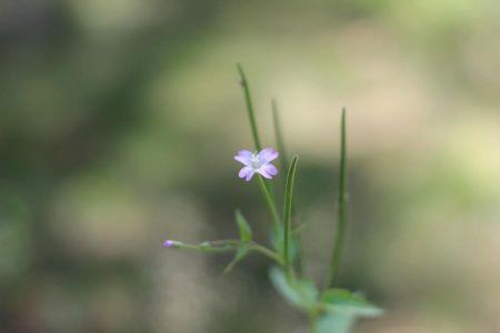 Kukka jota en ole vielä onnistunut nimeämään